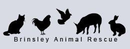 Brinsley Logo
