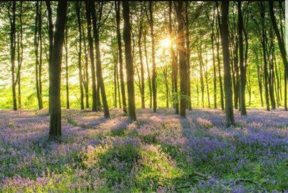 Woodland photo - sun through trees
