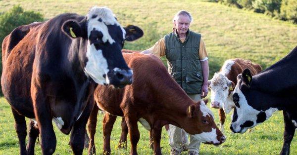 Vegetarian Farmer and cows