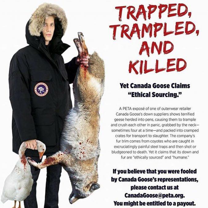 canada goose fur protest