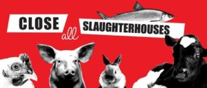 close all slaughterhouses banner