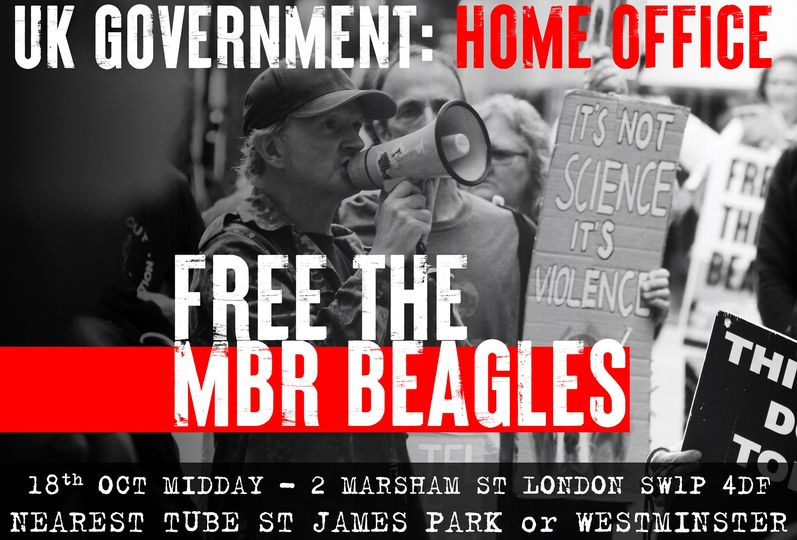 Poster for Free The MBR Beagles demo