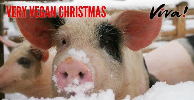 vegan viva pig picture