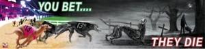 greyhound demo image